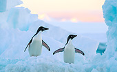 BRD 05 KH0359 01