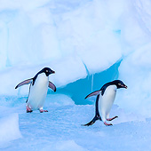 BRD 05 KH0362 01