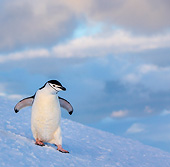 BRD 05 KH0379 01