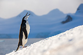 BRD 05 KH0382 01