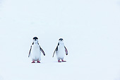 BRD 05 KH0385 01