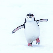 BRD 05 KH0386 01