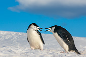 BRD 05 KH0387 01