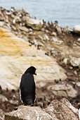 BRD 05 MC0002 01