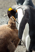 BRD 05 MC0004 01