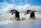 BRD 05 MC0007 01