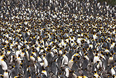 BRD 05 MC0011 01
