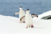BRD 05 MC0014 01