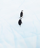 BRD 05 MC0015 01