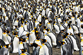 BRD 05 MH0006 01