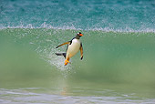 BRD 05 WF0002 01