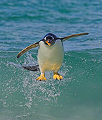 BRD 05 WF0003 01