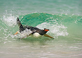 BRD 05 WF0004 01