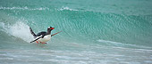 BRD 05 WF0007 01