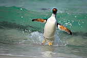 BRD 05 WF0008 01