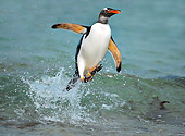 BRD 05 WF0010 01