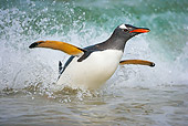 BRD 05 WF0012 01