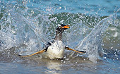 BRD 05 WF0013 01