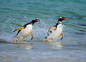 BRD 05 WF0016 01