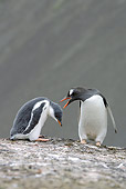BRD 05 WF0018 01