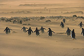 BRD 05 WF0020 01