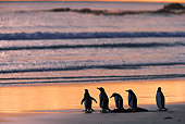 BRD 05 WF0021 01