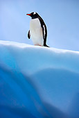 BRD 05 WF0025 01