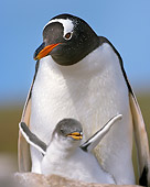 BRD 05 WF0026 01