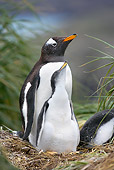 BRD 05 WF0028 01