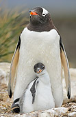 BRD 05 WF0029 01