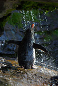 BRD 05 WF0034 01