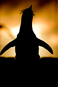 BRD 05 WF0038 01