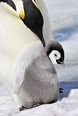 BRD 05 WF0043 01