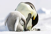 BRD 05 WF0044 01