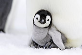 BRD 05 WF0046 01