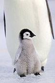 BRD 05 WF0047 01