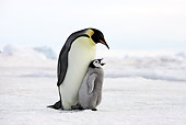 BRD 05 WF0048 01