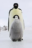 BRD 05 WF0049 01