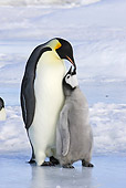 BRD 05 WF0050 01