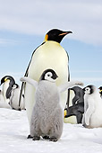 BRD 05 WF0051 01