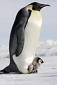 BRD 05 WF0052 01