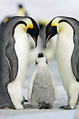 BRD 05 WF0054 01