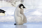 BRD 05 WF0058 01