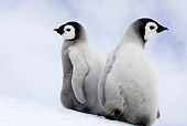 BRD 05 WF0060 01