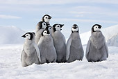 BRD 05 WF0061 01