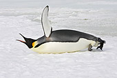 BRD 05 WF0067 01