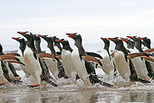 BRD 05 WF0069 01