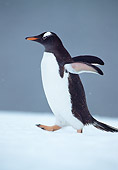 BRD 05 WF0074 01