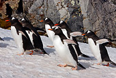BRD 05 DB0002 01
