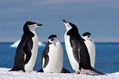 BRD 05 DB0004 01
